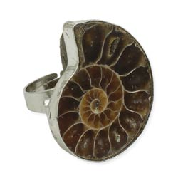 Ancient Finds Shell Fossil Ring